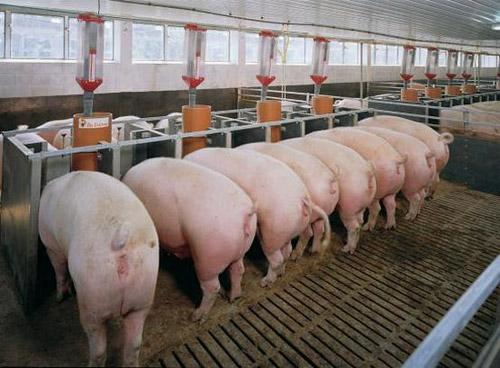 должностная инструкция свиновода - фото 11