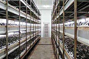 Оснащение помещения для выращивания шампиньонов