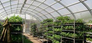Сельское хозяйство на дому