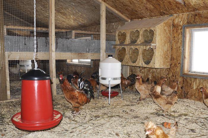 Как сделать птичник в домашних условиях