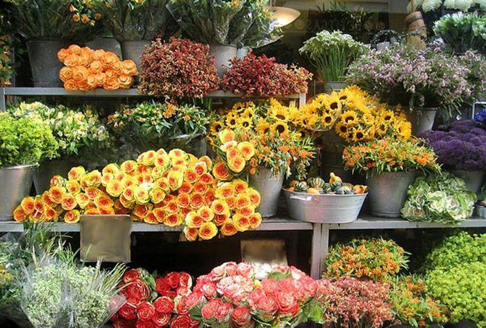 Справочник флориста цветы