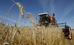 Налоговая декларация по единому сельскохозяйственному налогу