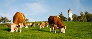 Штрафы за нарушение использования единого сельскохозяйственного налога